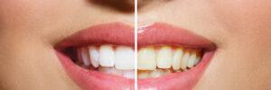 51040 dentist